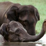 Kerala Wildlife Sanctuaries