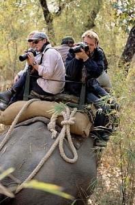 Kanha wildlife tour india