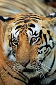 Wildlife Attractions Tour Package India