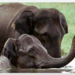 Kerala Wildlife Holidays Tour Packages India