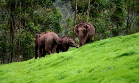 Kerala Wildlife Tour Package India