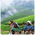 Kerala Hill Stations Tour Packages India