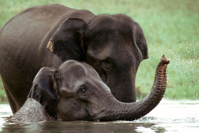 kerala wildlife tour packages india