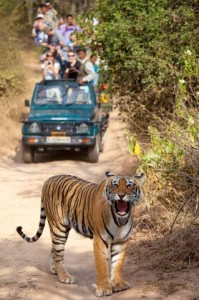 Rajasthan Wildlife Tour Packages India