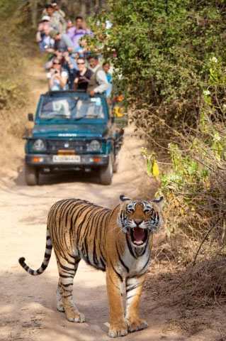 rajasthan india wildlife tour packages