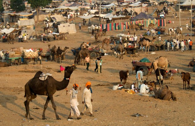 rajasthan pushkar travel package