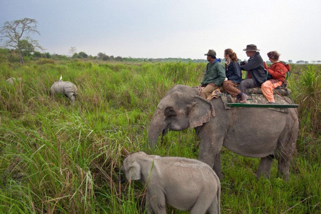 wildlife tour packages india